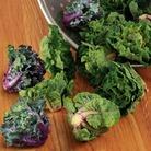 Brassica Petit Posy Plants