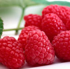 raspberry 'Tadmoor' (PBR) (raspberry   autumn fruiting)