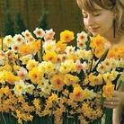 Autumn Bulbs-Narcissus Sweet Aroma - 50