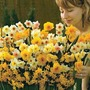 Autumn Bulbs-Narcissus Sweet Aroma - 50