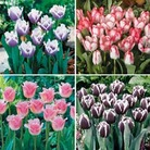 Tulip Extraordinary Collection - 40 Bulbs