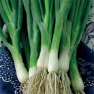 Heritage Collection - Onion Ciboule (Welsh Onion)