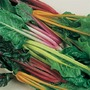 Heritage Seed Collection - Swiss Chard Five Colour Silverbeet