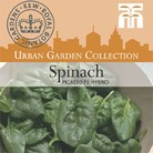 Urban Seed Collection - Spinach Picasso