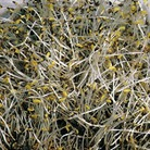 Sprouting Seeds - Alfalfa